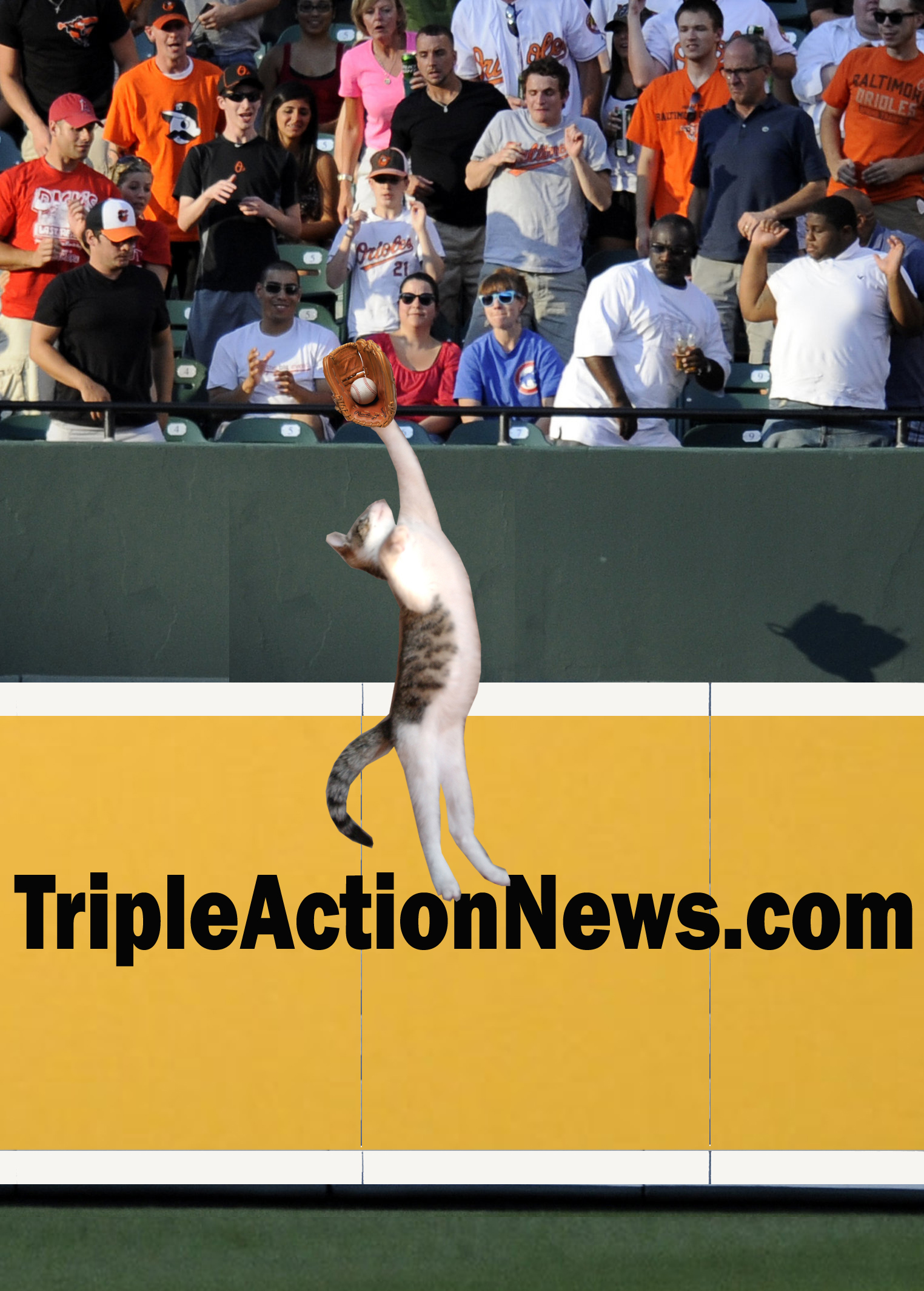 Amazing! I just learned that my cat, Elwood, played center field for the Tigers back in 2007. Here he is robbing Alex Rodriguez of a game-winning home run in a 2-1 win over the Yankees.